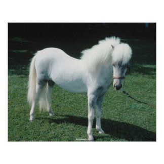 Beautiful white horse poster