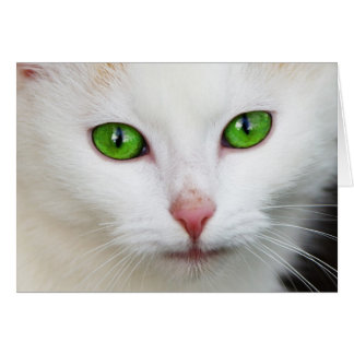 Beautiful white kitty cat kitten animal lover card