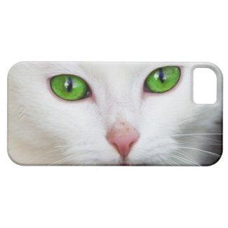 Beautiful white kitty cat kitten animal lover