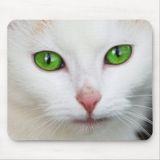 Beautiful white kitty cat kitten animal lover mouse pad