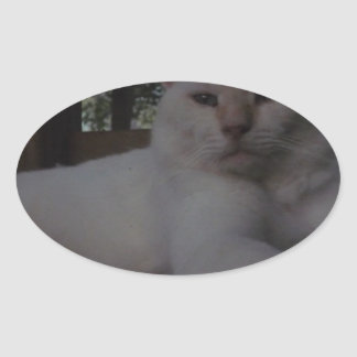 Beautiful White, long haired cat Sticker