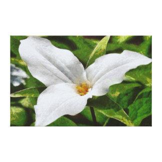 Beautiful White Michigan Trillium Flower Canvas Print