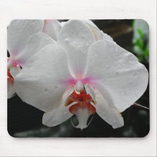 Beautiful White Orchid Mouse Pad