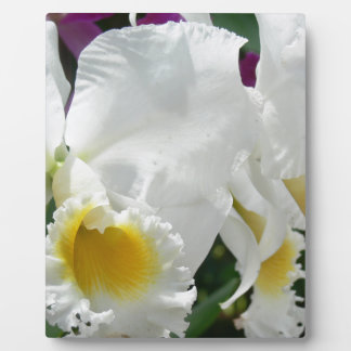 Beautiful White Orchids in Thailand Photo Easel Display Plaque
