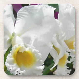Beautiful White Orchids, Thailand Plastic Coaster
