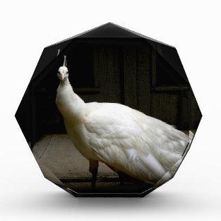 Beautiful White Peacock Award