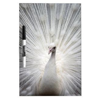 Beautiful white peacock Dry-Erase board