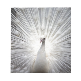 Beautiful white peacock note pad