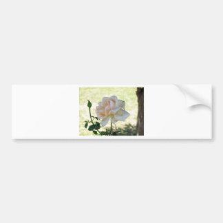 Beautiful white rose flower car bumper sticker
