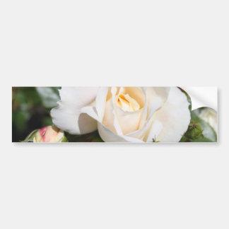 beautiful white rose flower. love and romance bumper sticker