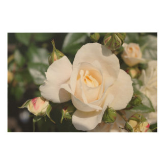 Beautiful white rose flowers. Floral photo art. Wood Print