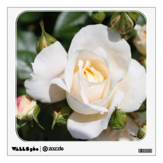 Beautiful white rose flowers. floral photography wall decal