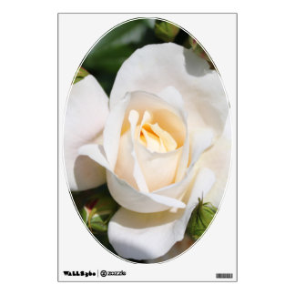 Beautiful white rose flowers. floral photography, wall sticker