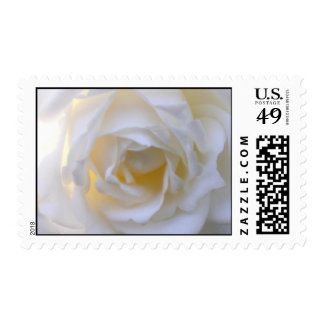 beautiful white rose postage stamp
