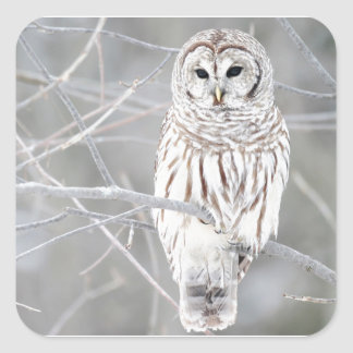 Beautiful White Snow Owl Design Square Sticker