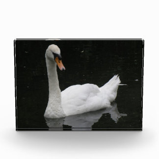 Beautiful White Swan Decorative Award