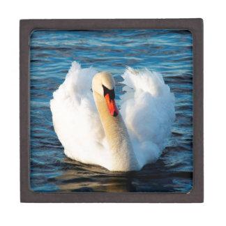 Beautiful White Swan in lake Keepsake Box