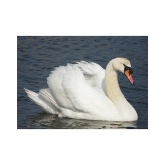 Beautiful white swan in water canvas print