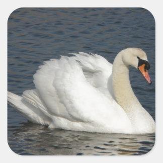 Beautiful white swan in water sticker