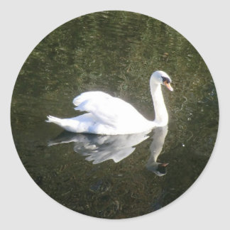Beautiful White Swan Reflecting On The River Classic Round Sticker