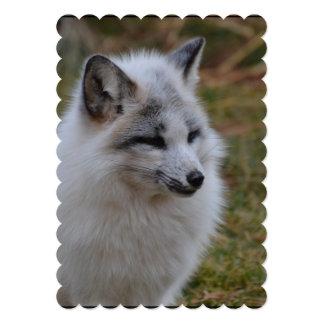 Beautiful White Swift Fox Card