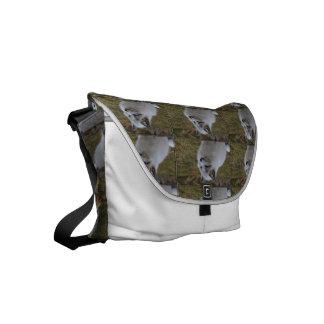 Beautiful White Swift Fox Small Messenger Bag
