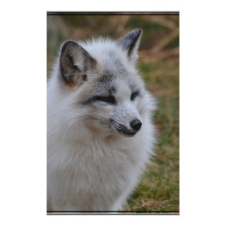 Beautiful White Swift Fox Stationery