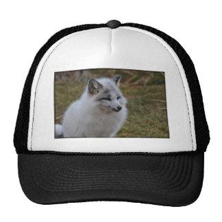 Beautiful White Swift Fox Trucker Hat
