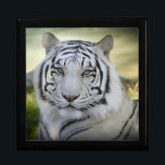 "Beautiful White Tiger (v2) Gift Box<br><div class=""desc"">Stunning White Tiger quite alert set in a vibrant background.  This Gift Box is great for any occasion and you choose the color!   Also available in a Greeting/Note Card and coordinating Postage in our store.  Thank you for looking!</div>"