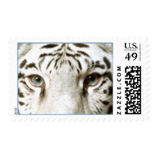 BEAUTIFUL WHITE TIGER'S TIGER EYES ~ POSTAGE STAMP