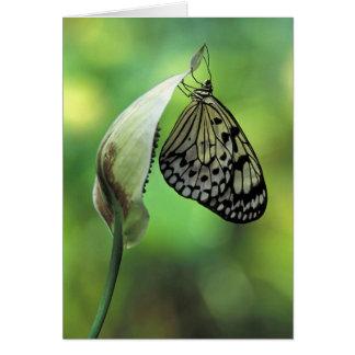 Beautiful White Tree Nymph Greeting Card