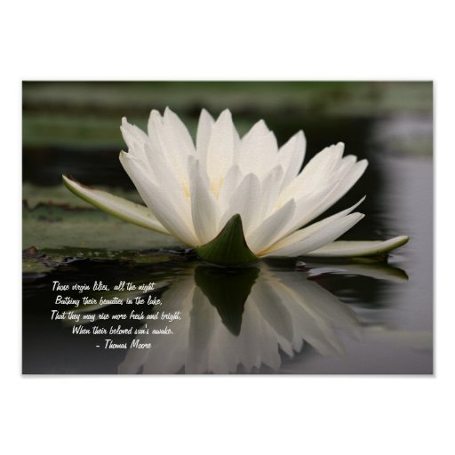 Beautiful White Water Lily Floating on a Lake Poster