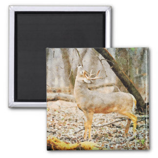 Beautiful Whitetail Deer Buck Calling Watercolor Magnet