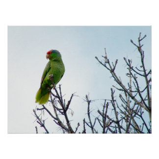 Beautiful Wild Green Parrot Poster