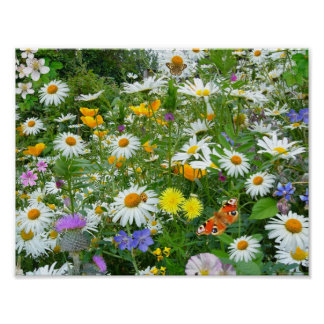 Beautiful Wildflower and Butterfly Meadow Poster