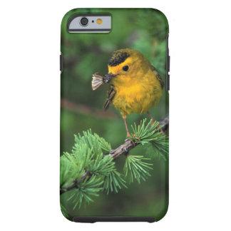 Beautiful Wilson's Warbler; Birder's iPhone6 Case