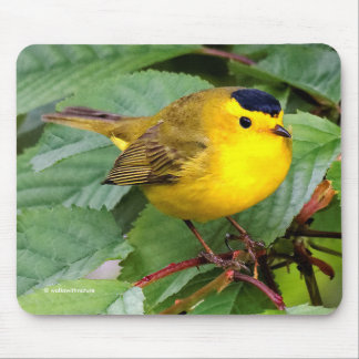 Beautiful Wilson's Warbler in the Cherry Tree Mouse Pad