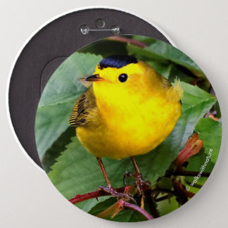 Beautiful Wilson's Warbler in the Cherry Tree Pinback Button