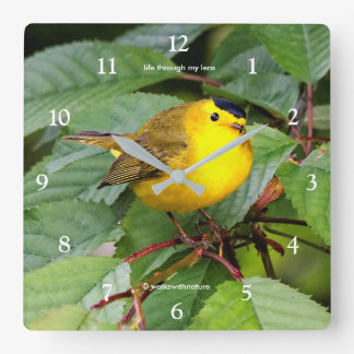 Beautiful Wilson's Warbler in the Cherry Tree Square Wall Clock