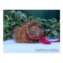 Beautiful Winter Guinea Pig Postcard