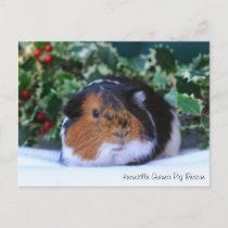 Beautiful Winter Guinea Pig Postcard
