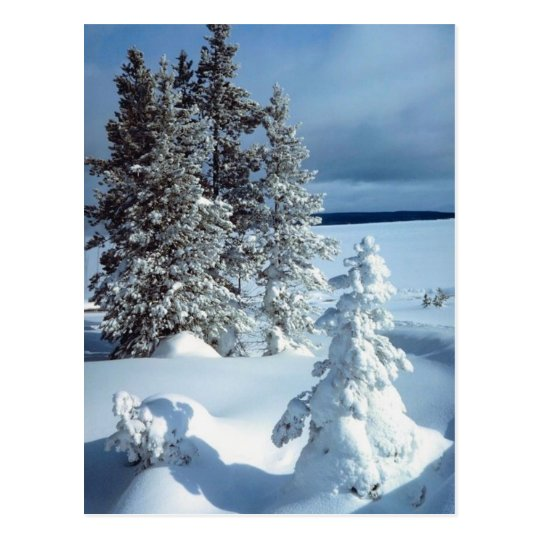 Beautiful Winter Scene Postcard