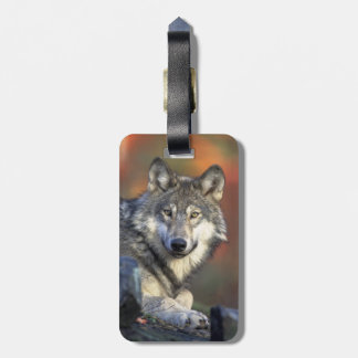 Beautiful Wolf Bag Tag