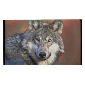 Beautiful Wolf iPad Folio Cases