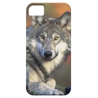 Beautiful Wolf iPhone SE/5/5s Case