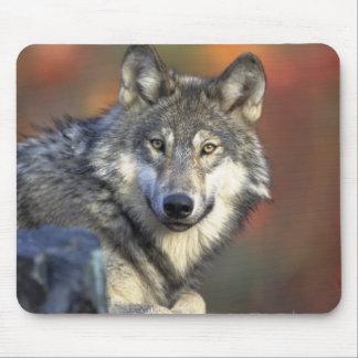 Beautiful Wolf Mouse Pad