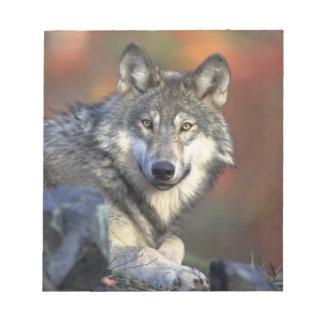 Beautiful Wolf Scratch Pad
