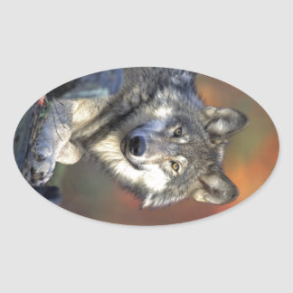 Beautiful Wolf Oval Sticker