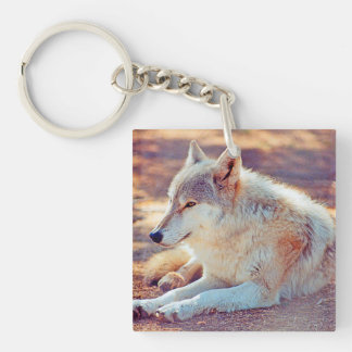 Beautiful Wolf Resting - Keychain