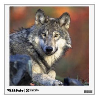 Beautiful Wolf Wall Decal
